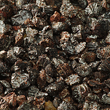 Dried Carmine Insects
